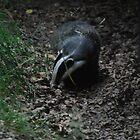 Badger Watch II by Gwyn Lockett