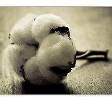 Cotton Capsule by Photograbber