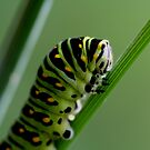 Larva (caterpillar)  by Larry Trupp