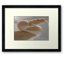 Albino Framed Print