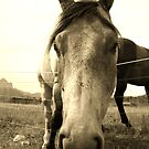 Nosey Horse in Sepia by Alyce Taylor