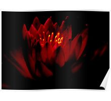 THE   WARM GLOW  OF A   WATER  LILY    Poster