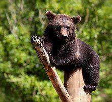 Baby Bear by Katariina Lonnakko