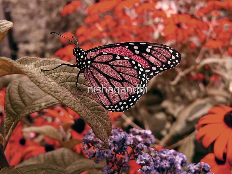 Jewel butterfly... by nishagandhi