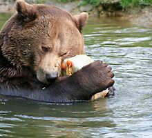 Bear hugs by Stefanie Köppler