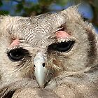 GIANT or Verreaux Eagle Owl -  Bubo lacteus by Magaret Meintjes