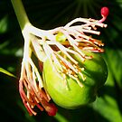 Hula dancing flower pod by ♥⊱ B. Randi Bailey