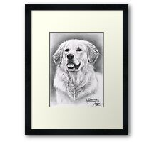 Golden Retriever Spence Framed Print