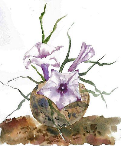 Cactus Ipomoea bolusiana by rentia