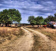 Country Road     ( BoneYard Series ) by Carla Jensen