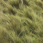 Maram Grass by Fossdos