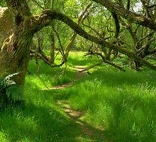 Woodland path by M G  Pettett