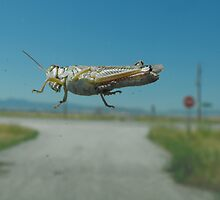 Misguided Grasshopper by Jan  Tribe