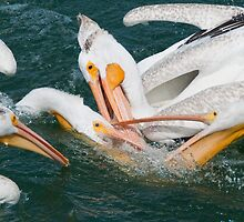 Fish Fight!!!! by Kerri Gallagher