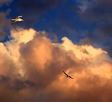 Seagulls at dusk by makedon