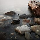 driftwood 2 by Bill vander Sluys