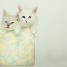 Kittens by Susanne Correa