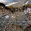 Snow Gums by Harry Oldmeadow