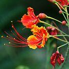 Flower by Philip Alexander