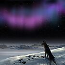 Northern Lights by Igor Zenin