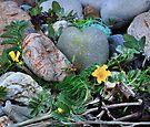 Silverweed on Hoswick Beach, Shetland by Richard Ion