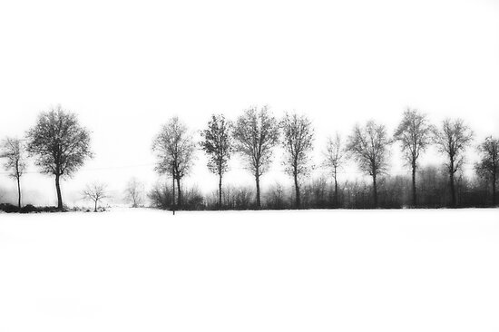 Winter bareness by Silvia Ganora