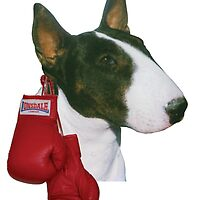 I'm a Bullie not a Fighter! by Louise Morris