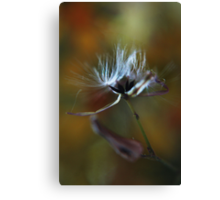 Silk (from wild flowers collection)  Canvas Print