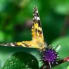 Butterfly on leaf by david marshall