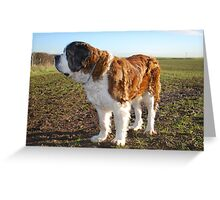 What's that over there? Greeting Card