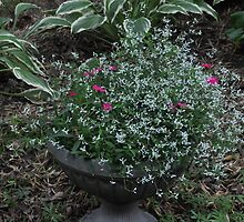 White Frost and Pink Dianthus by mltrue