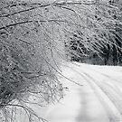 After an Ice Storm, Pocono Mts by Yuri Lev