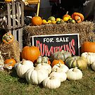 Pumpkins For Sale by JEOtterbacher
