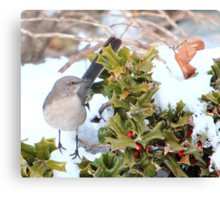 Mockingbird and Holly Canvas Print