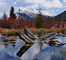 Banff National Park  by Ursula Tillmann