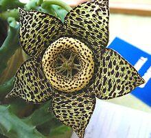 Unusual plants, Unusual days by MarianBendeth