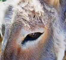 Donkey's Eye by dozzam