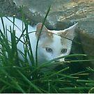 kitten, stalking, cute, white cat, stalker, nature by AnimalHealerArt