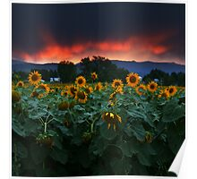 Sunsets Storms and Sunflowers Poster