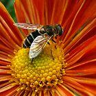 Bee Over Orange  Flower by tonymm6491