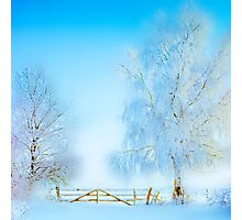 """Winter Landscape  """"Trees with fence"""" Photographic Print"""