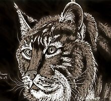 A Bobcat's Stare by Dawn B Davies-McIninch