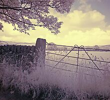 Infrared #01 by shutterjunkie