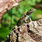 Lizard on a log by Patrick Czaplewski