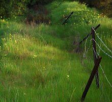 broken fences by Hannah Saldaris