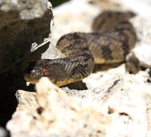 Snake on a wall by mimialanjo