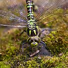 Dragonfly by Chris Tait