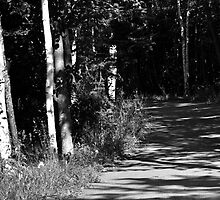 Through the Birches by Craig Blanchard