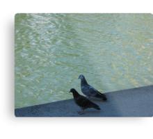 Parisian pigeons, Quai de la Marne Metal Print