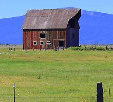 Fort Klamath Barn by Debbie Roelle